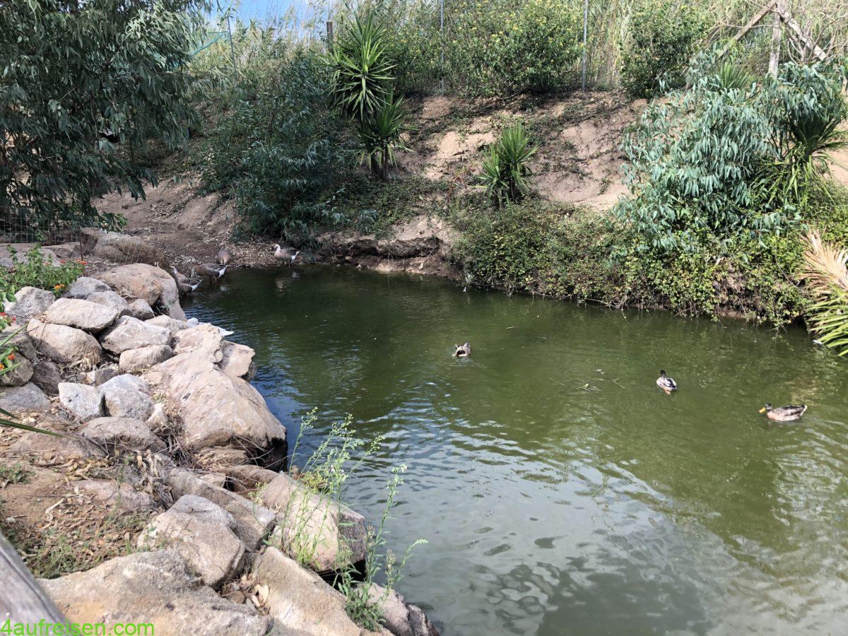 Teich mit Enten auf dem Campingplatz.