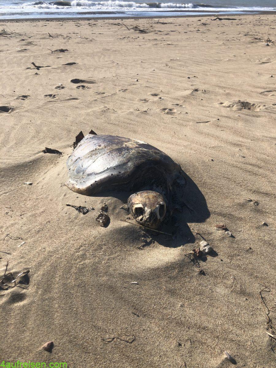 Death Turtle.