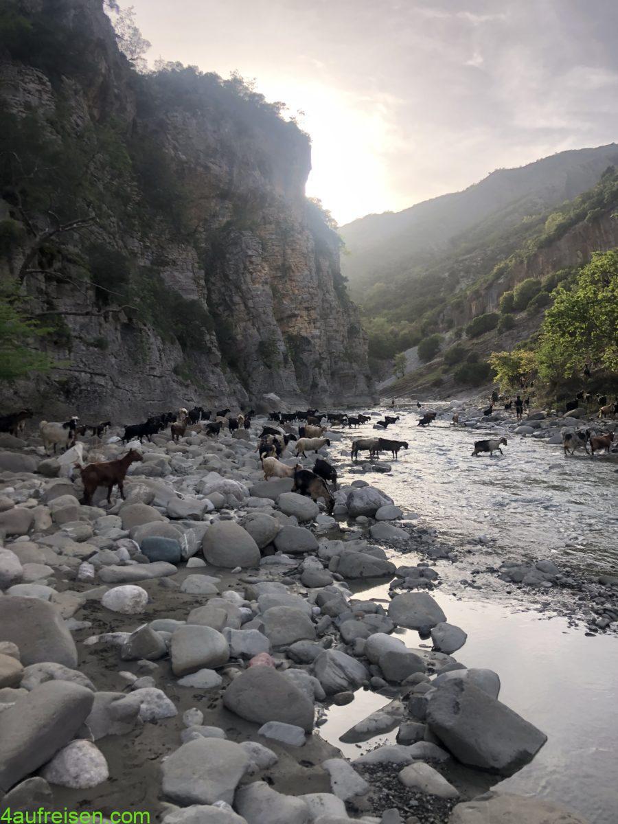 Wanderung mit Ziegen.